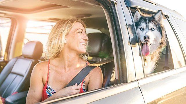 perros viaje coche