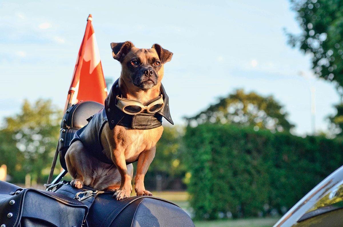 ir con perro en moto