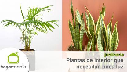Fichas consejos de mantenimiento y t cnicas para plantas for Plantas de interior con poca luz