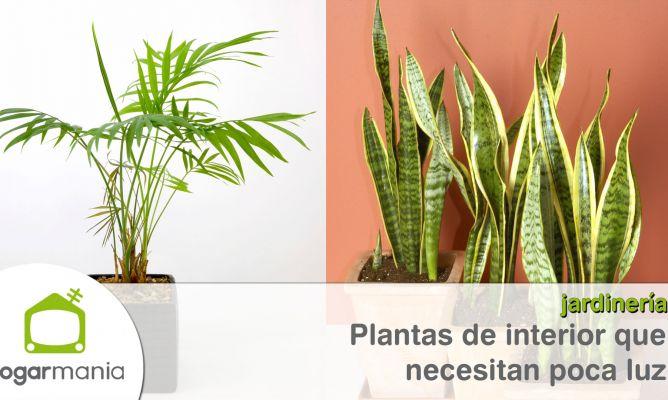 Plantas de interior que resisten con poca luz hogarmania for Plantas de interior con poca luz