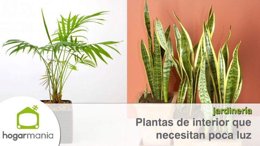 Planta de interior plantas de interior con flores riego for Plantas de interior que no necesitan luz