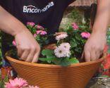 Cuidados de la rosa de pitiminí o rosal mini - Composición - Paso 2
