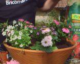 Cuidados de la rosa de pitiminí o rosal mini - Composición - Paso 3