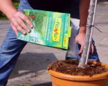 Cómo sanear un olivo - Abonado