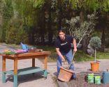 Cómo sanear un olivo - Paso 1