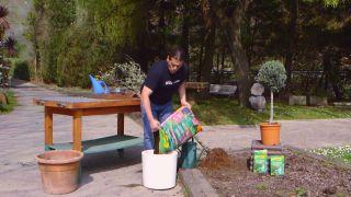 Recuperar olivo - Paso 4