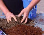 Cómo sanear un olivo - Tierra mineral