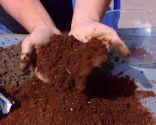 Cómo sanear un olivo - Tierra orgánica