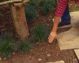 Reverdecer un camino de losetas con ophiopogon - Plantación en cajas de fruta