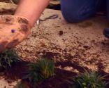 Reverdecer un camino de losetas con ophiopogon - Fruto azul
