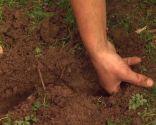 Reverdecer un camino de losetas con ophiopogon - Galerías de los topillos