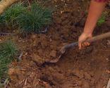 Reverdecer un camino de losetas con ophiopogon - Paso 1