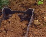 Reverdecer un camino de losetas con ophiopogon - Paso 2