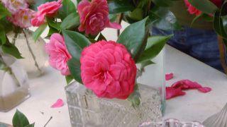 Variedades de camelias según su flor