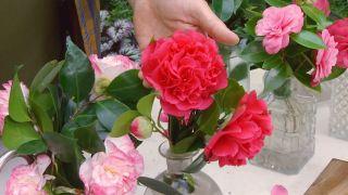 deco-650-camelias-variedades-segun-flor-flor-peonia