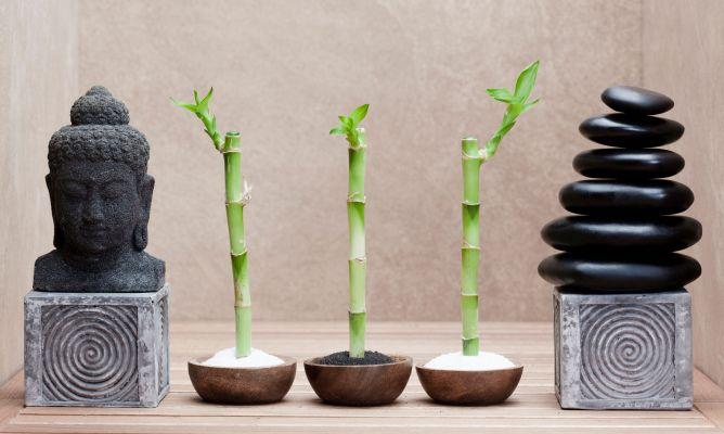 Decoraci n feng shui con plantas hogarmania for Decoracion del hogar con feng shui