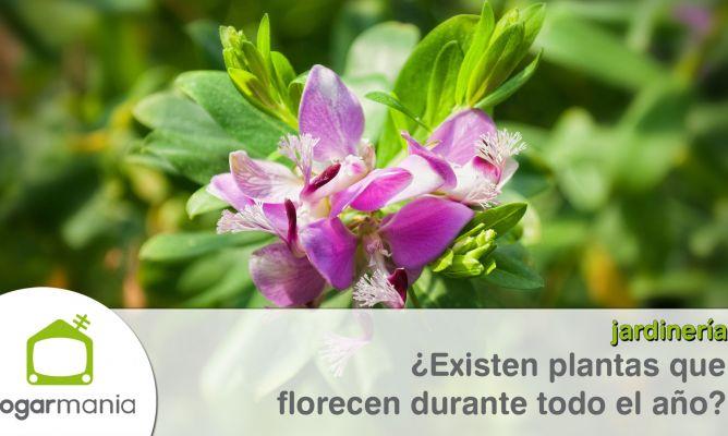Existen plantas que florecen durante todo el a o for Plantas exterior todo el ano