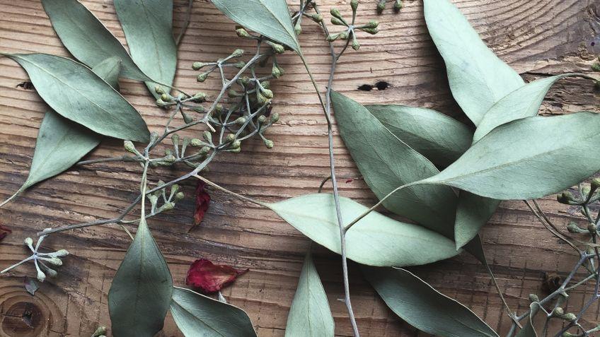Decorar Con Flores Secas Hogarmania - Decorar-con-flores-secas