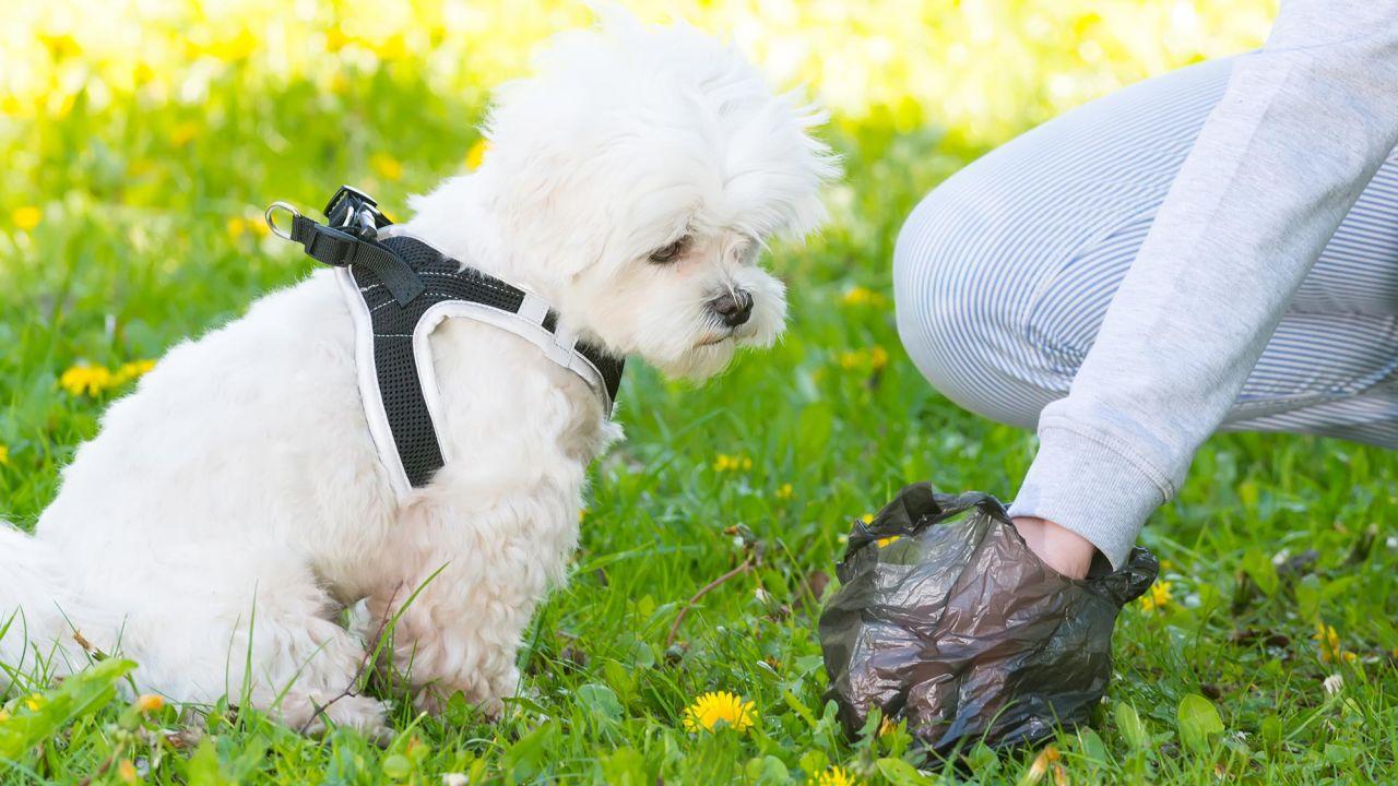 El deber de recoger los excrementos del perro - Hogarmania