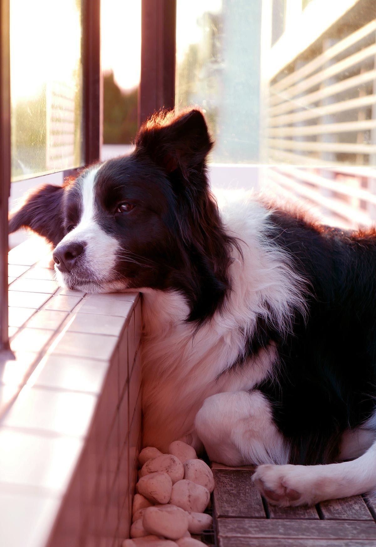 perros balcón casa - tiempo