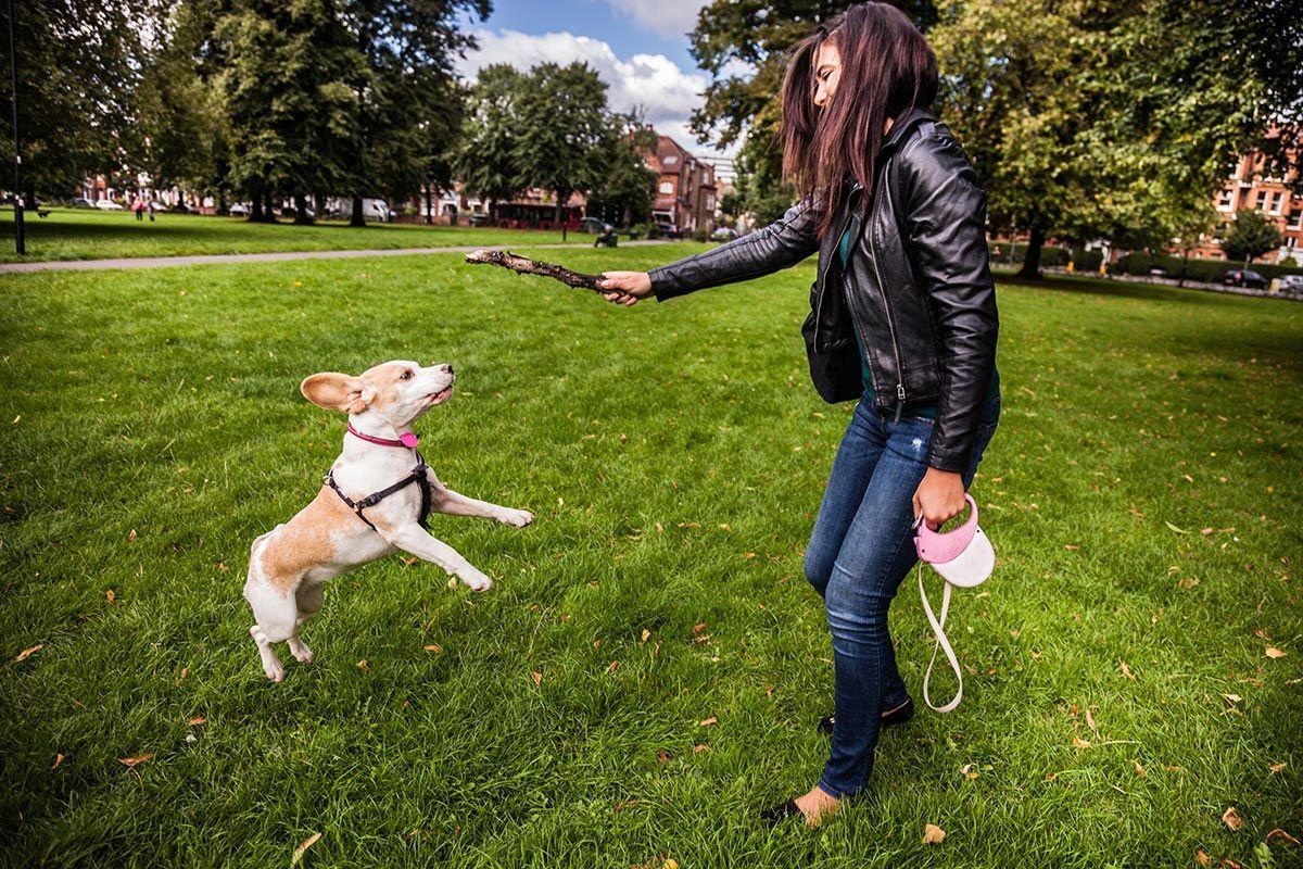normas perros ciudad