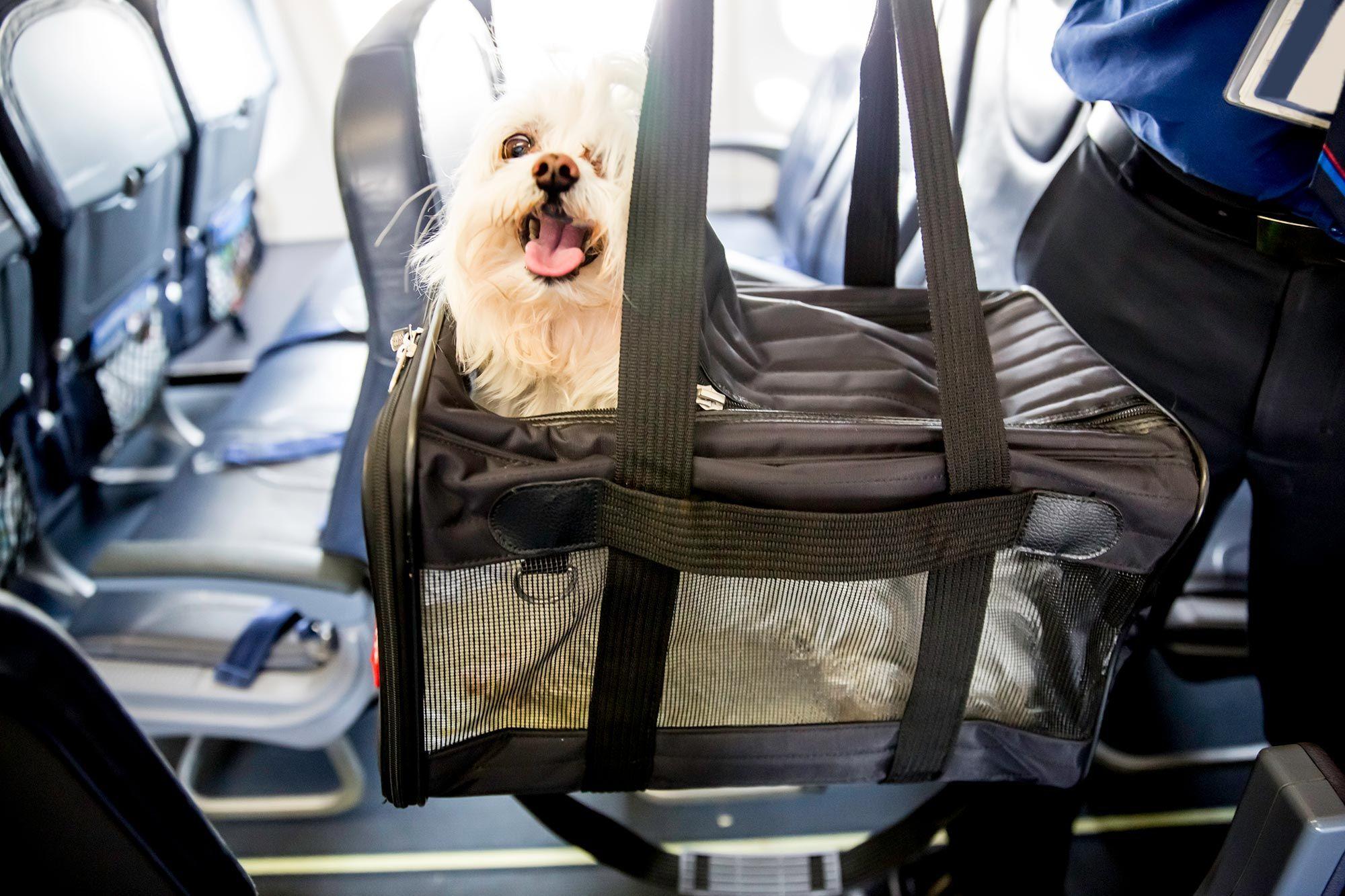 viajar mascotas avión