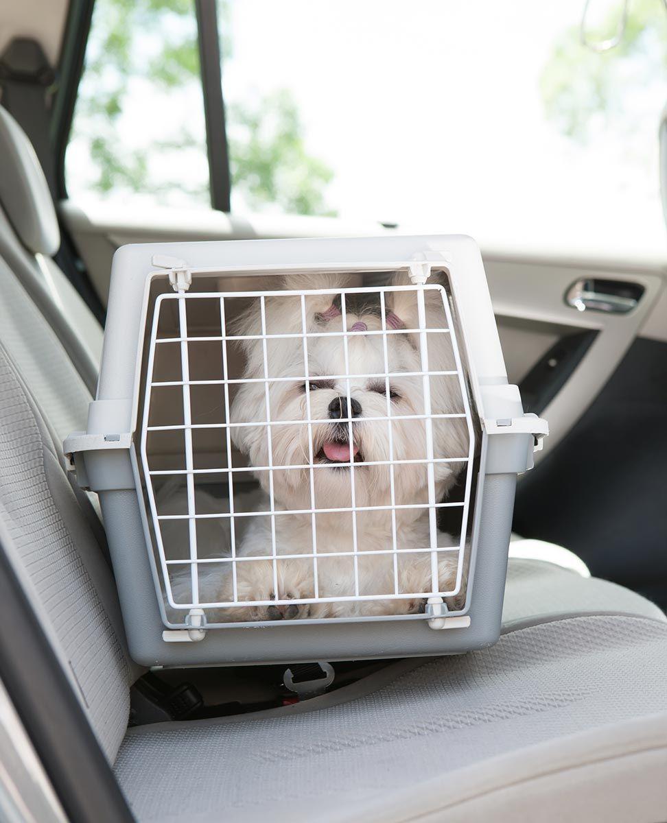 mascotas viaje coche