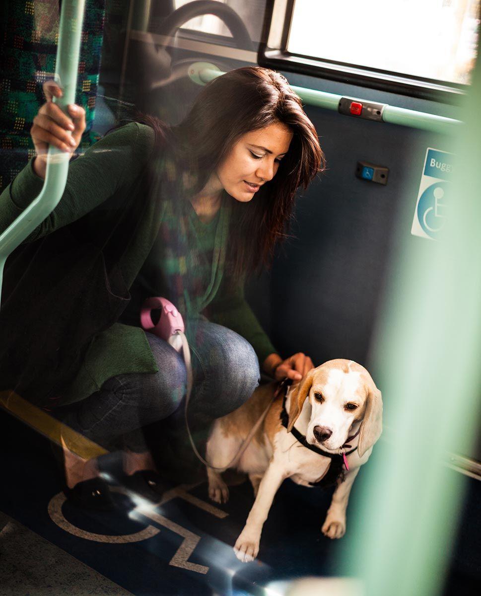 mascotas viajar autobús