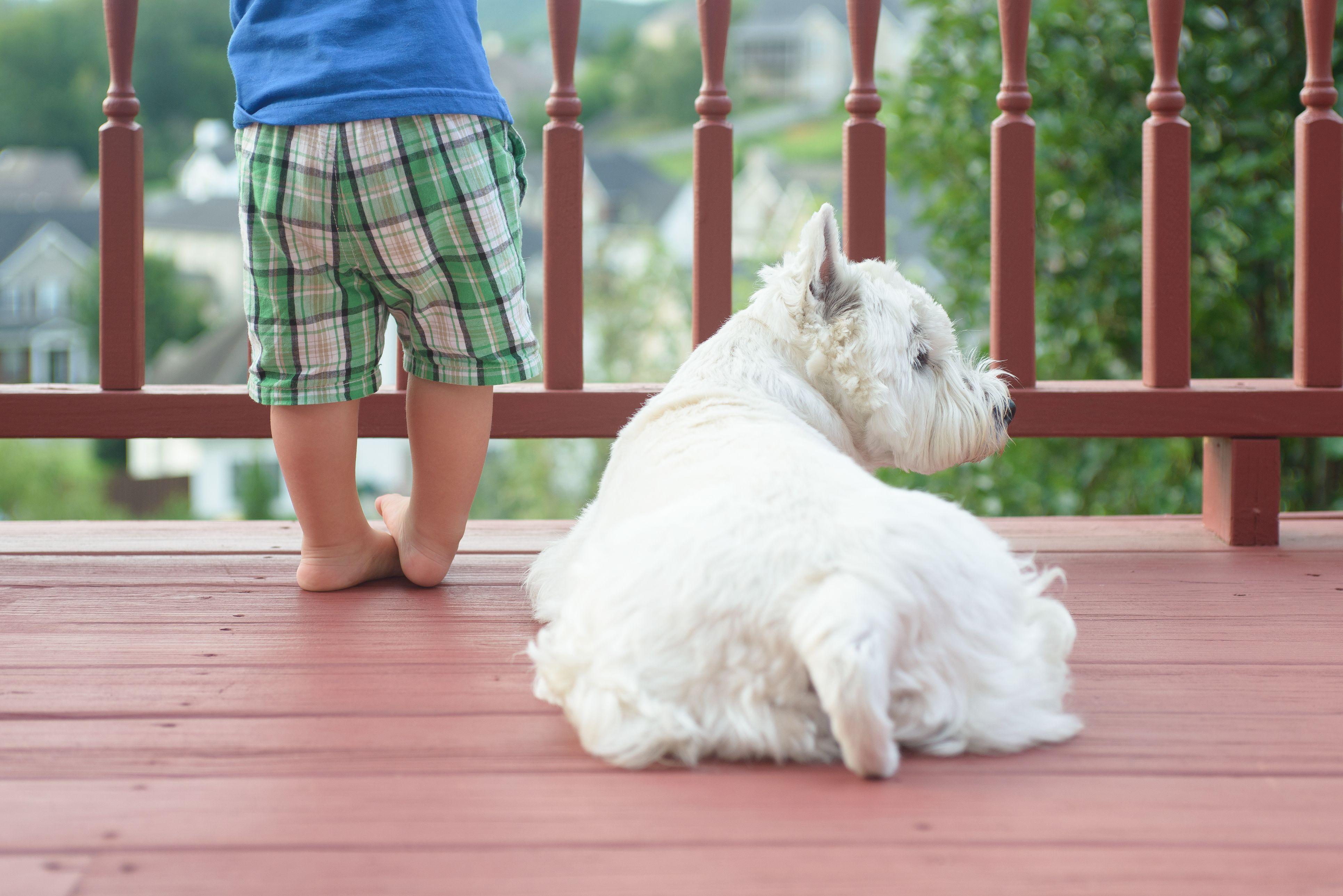 perros balcón casa - cachorros