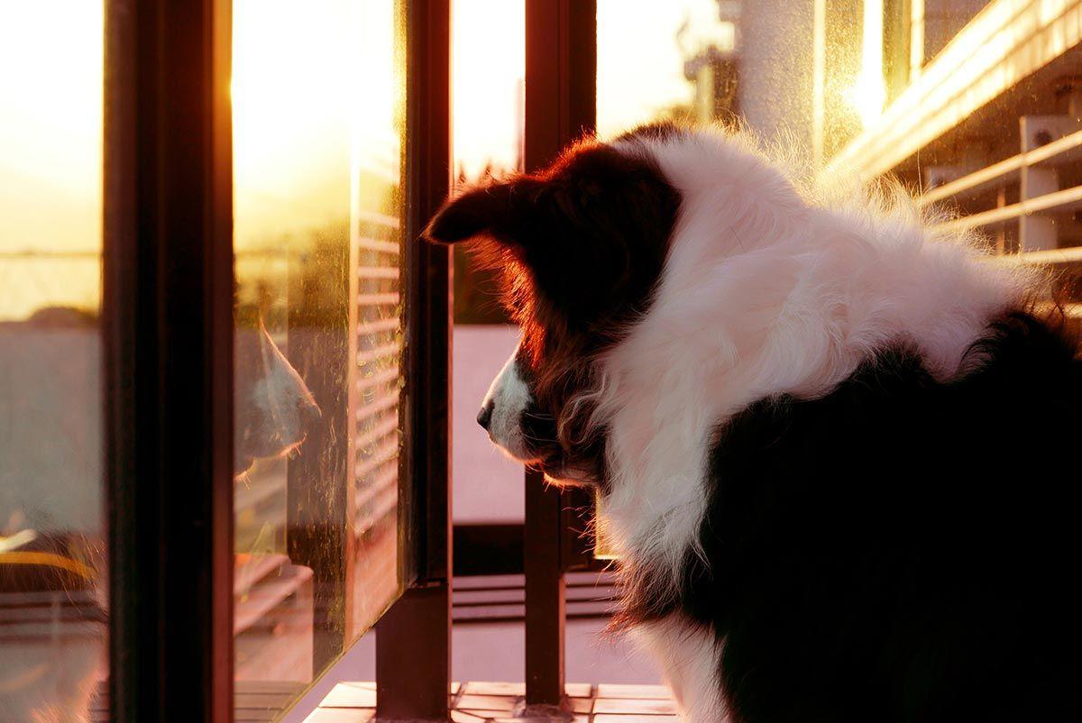 perros balcón casa - puerta