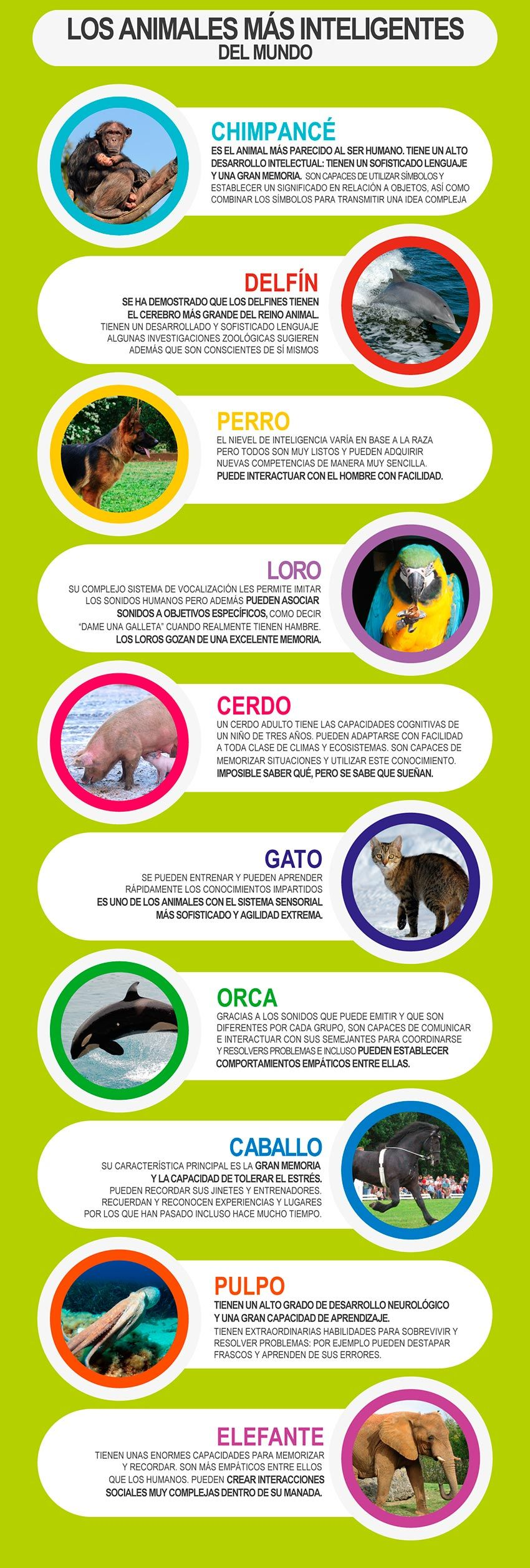 10 animales inteligentes