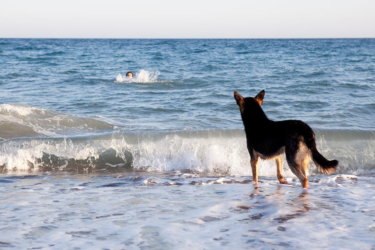 adiestramiento perros socorristas