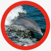 animales inteligentes - delfín