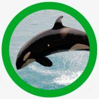 animales inteligentes orca