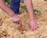 La permacultura - Paso 5