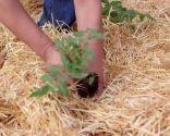 La permacultura - Paso 6