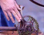 Composición de helechos reciclando una bicicleta - Elementos reciclados