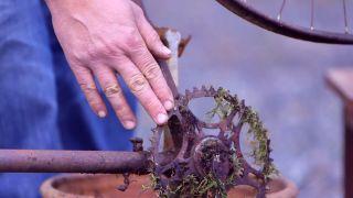 Composición de helechos reciclando una bicicleta - paso 1