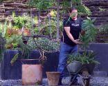 Helecho woodwardia radicans