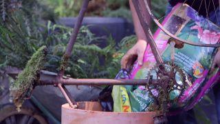 escultura vegetal con helechos y una bicicleta oxidada - paso 2