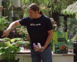 Reproducción y cuidados de las hostas - Eliminar caracoles truco casero