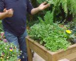 Plantar hierbas aromáticas en mesas de cultivo - Mesas de cultivo