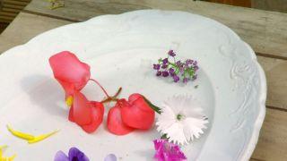 Plantar hierbas aromáticas en mesas de cultivo
