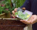 Plantar hierbas aromáticas en mesas de cultivo - Paso 3