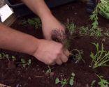 Huerto urbano y ecológico en mesas de plantación - Paso 3