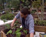 Huerto urbano y ecológico en mesas de plantación - Paso 4