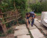 Acondicionar un camino de losetas sembrando césped - Ophiopogon