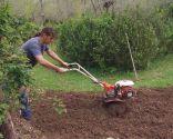 Acondicionar un camino de losetas sembrando césped - Paso 1