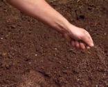 Acondicionar un camino de losetas sembrando césped - Paso 3