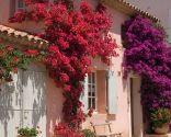 Diferentes plantas para decorar fachadas - Buganvilla